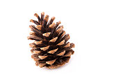fir-cone close-up, isolated on a white background