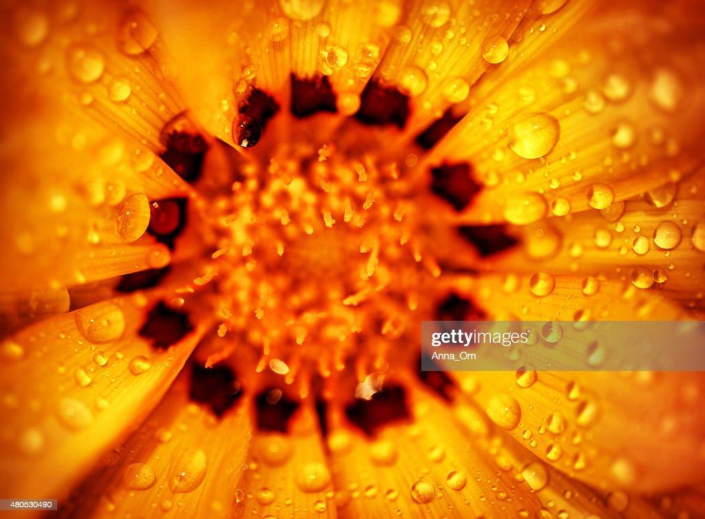 Schöne Blume Hintergrund : Stock-Foto