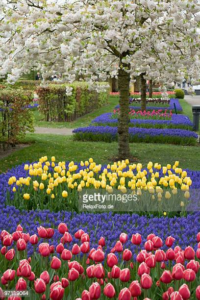 Beautiful flower bed of tulips in spring
