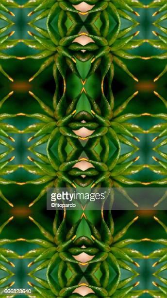 Beautiful flower kaleidoscope pattern