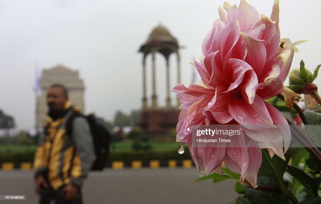 A Beautiful flower with water bubbles after rain in the capital on February 17, 2013 in New Delhi, India. The chilly weather in North India continues as rains lash several areas in Delhi, Uttarakhand, Himachal Pradesh and Uttar Pradesh.