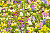 Springtime, Flower, Field, Front or Back Yard, Meadow