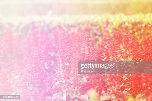 beautiful flowers made with color filters : Stock Photo