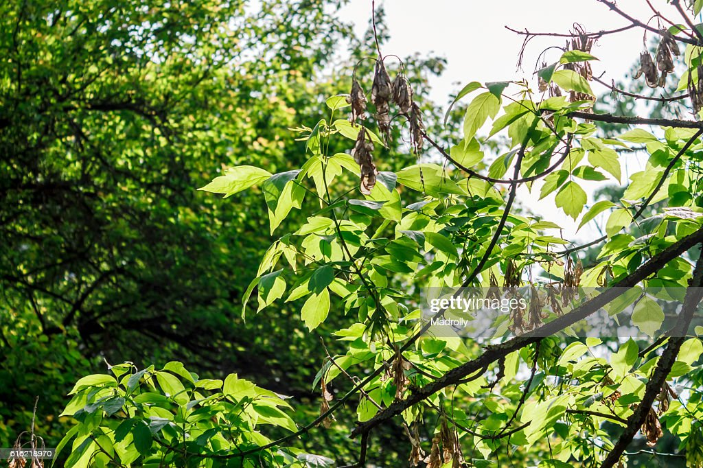 Beautiful foliage : Stock Photo