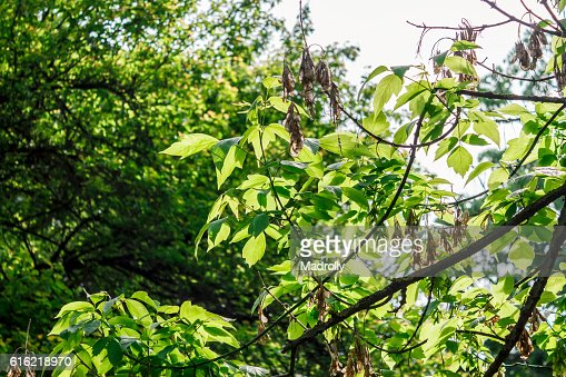 Beautiful foliage : Bildbanksbilder