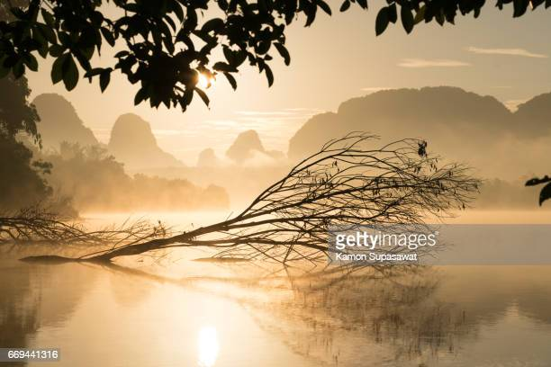 Beautiful fresh morning and death tree with golden sunrise light to lake 'Nongtalae' in Krabi privince in Thailand