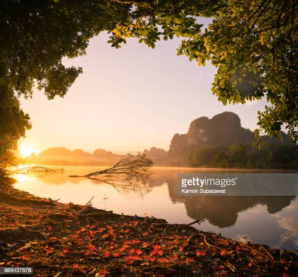 Beautiful fresh morning with tree frame of golden sunrise light and red flowers fall to ground to lake 'Nongtalae' in Krabi privince in Thailand