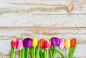 Colorful tulips border on old wood background with copy space