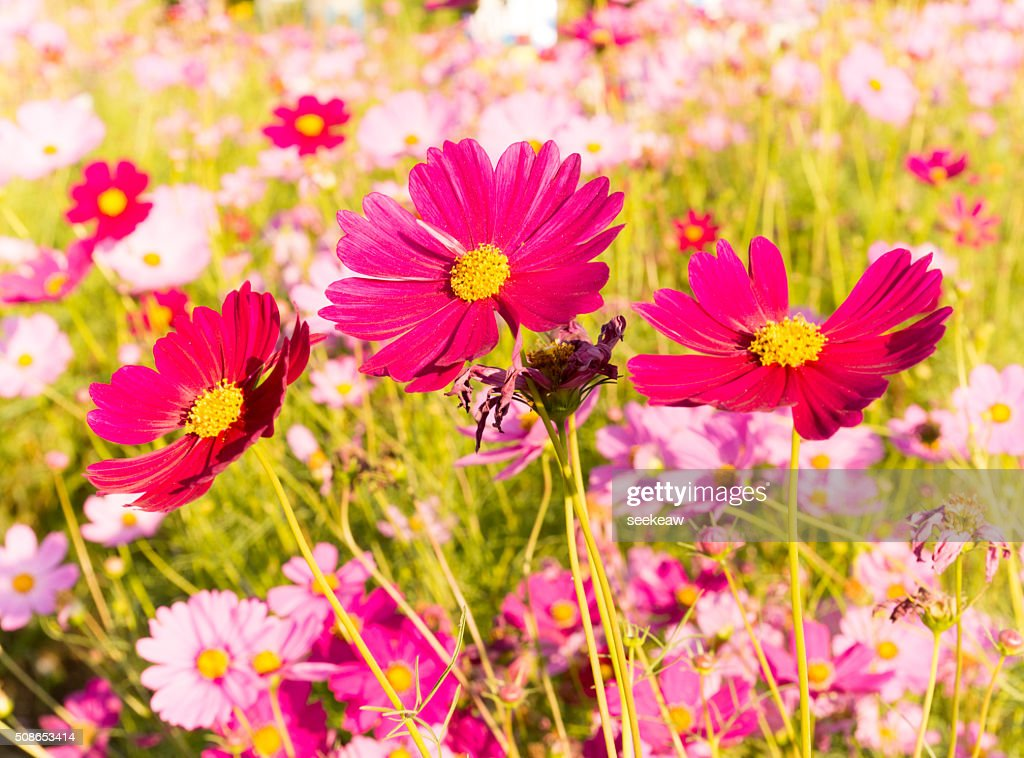 beautiful garden flowers : Stock Photo