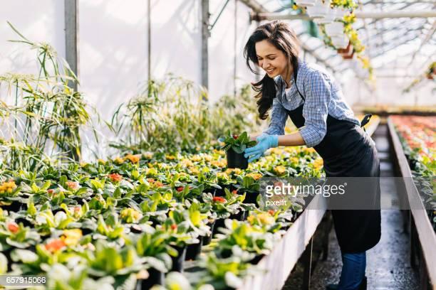 Beautiful girl in the flower nursery