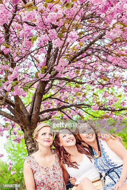 Beautiful girls in cherry blossom