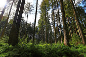 A beautiful green forest in Bavaria