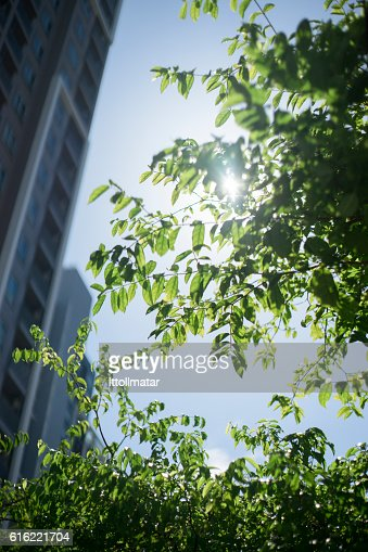 beautiful green leave and branch : Stock Photo