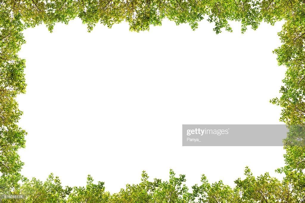 Bela moldura folhas Verdes sobre fundo branco. : Foto de stock