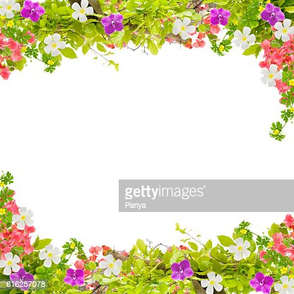 Beautiful green leaves frame with flower on white background : Foto de stock