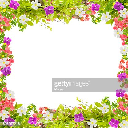 Beautiful green leaves frame with flower on white background : Stock Photo