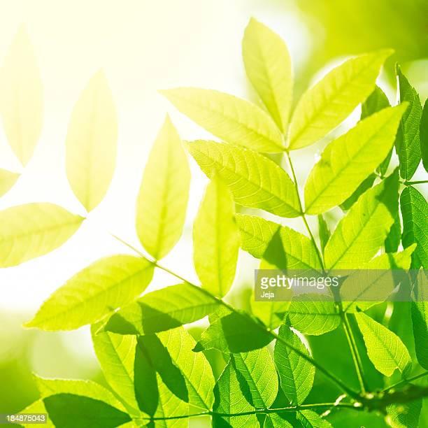 Schöne grüne Blätter