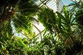 Beautiful greenhouse tropical garden