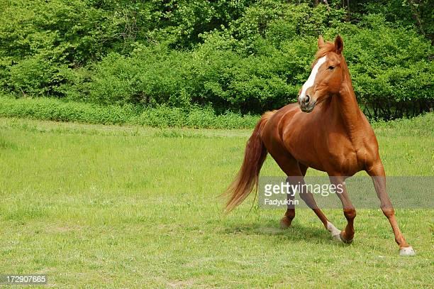 Wunderschöne Horse