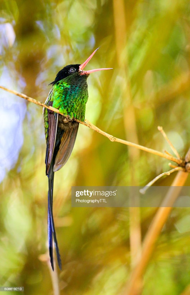 Beautiful hummingbird sitting on a branch in a garden. : Stock Photo