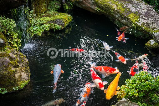 Beautiful koi pond japan stock photo thinkstock for Koi pond jets