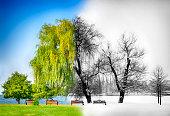 Tree, Season, Winter, Springtime, Bare Tree