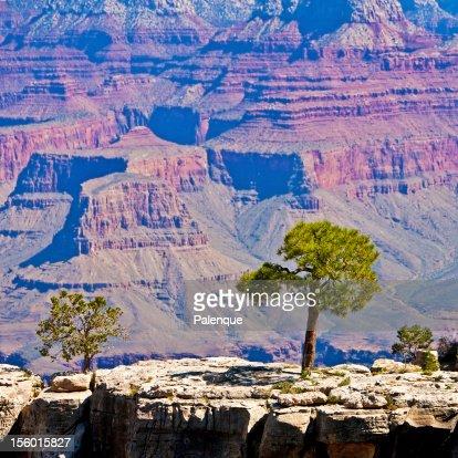 Beautiful Landscape of Grand Canyon : Stock Photo