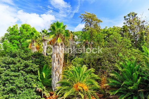 magnifique paysage de la jungle tropicale humide photo thinkstock. Black Bedroom Furniture Sets. Home Design Ideas