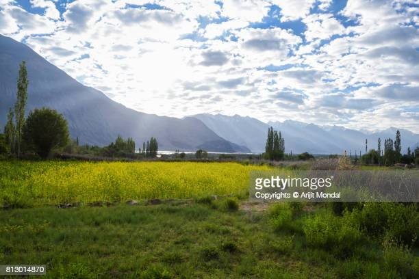 Beautiful landscape of Leh, Ladakh with green field, mountain and blue sky