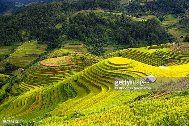 Beautiful landscape view of rice terrace