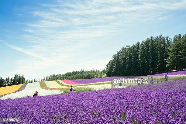 Beautiful lavender and flowers field at Tomita farm in summer.