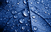 close-up beautiful leaf with drops