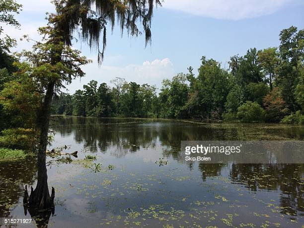 Beautiful Louisiana Coastline