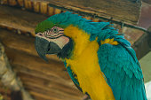 beautiful macaw fullcolor