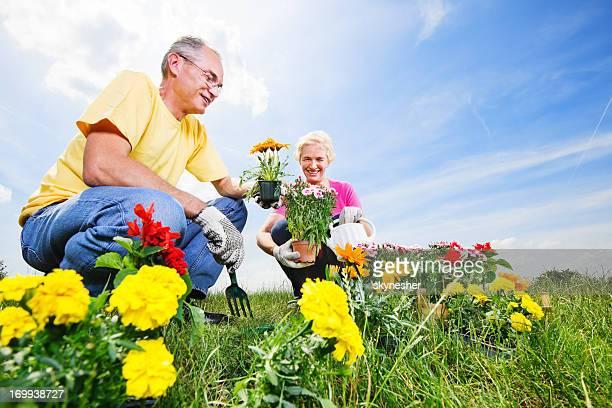 Beautiful mature couple planting flowers