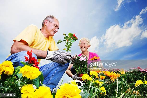 Beau couple d'âge mûr planter des fleurs.