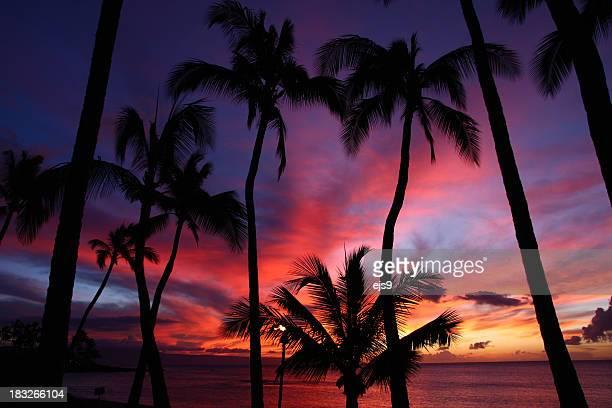 ビーチが美しいマウイのホテル、ハワイのオーシャン・リゾートの夕暮れのヤシの木