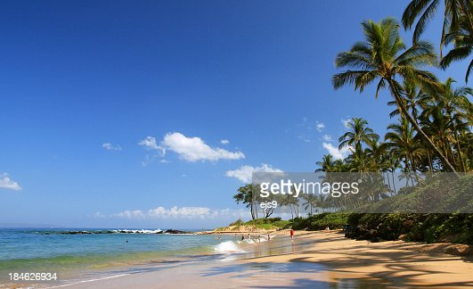 Beautiful Maui Hawaii palm tree resort beach