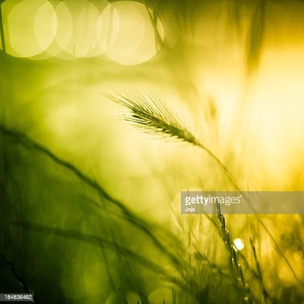 Schöne meadow