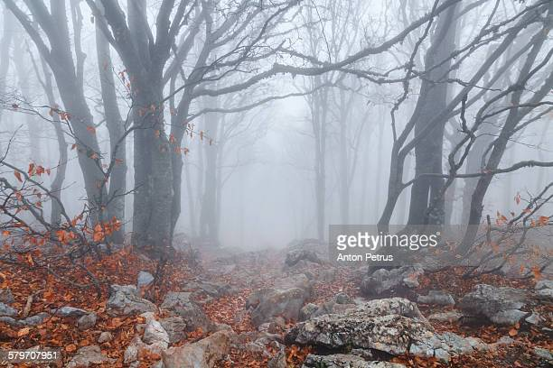 Beautiful misty autumn forest. Crimea.