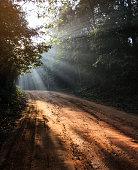 Footpath or dirt track through forest illuminated by sunbeams through fog