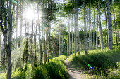 A beautiful summer hiking trail through Aspen Tree grove on Vail Colorado ski resort mountain
