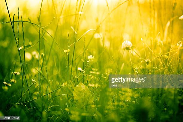 Beautiful nature in green and yellow tones