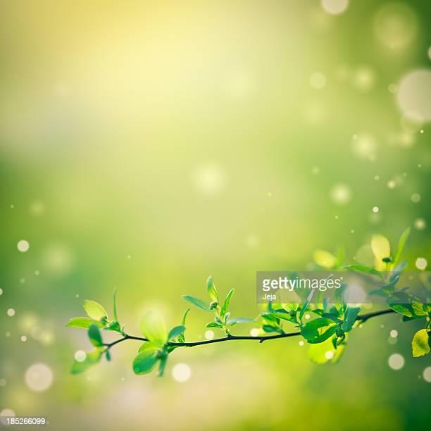 Bellissima natura