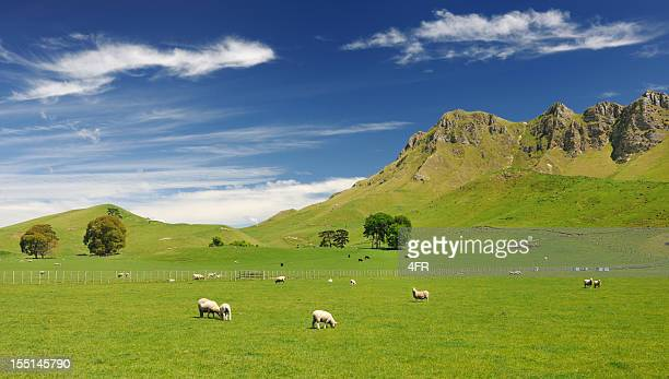 Beautiful New Zealand (XXXL)