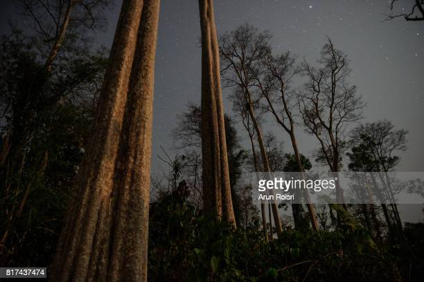Beautiful night landscape with star-trail in the night sky on background of the dry forest in Khao yai National Park, Thailand
