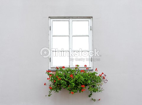 Beautiful Old Window Frame With Flower Box And Light Grey Wall ...