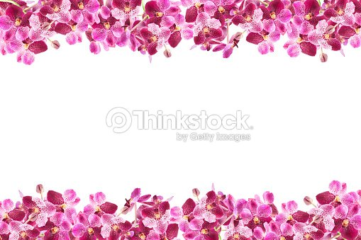 Beautiful Orchid Flower Frame On White Background Stock Photo ...