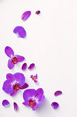 beautiful orchids on white background
