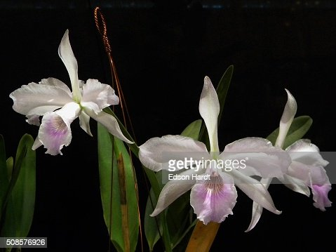 beautiful orchids : Stock Photo